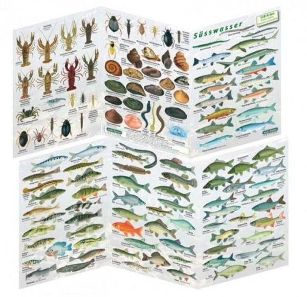 Fischfaltblatt Süsswasser Fischbestimmungskarte