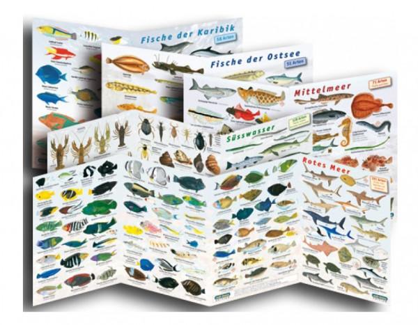 Fischfaltblatt Komplettsammlung