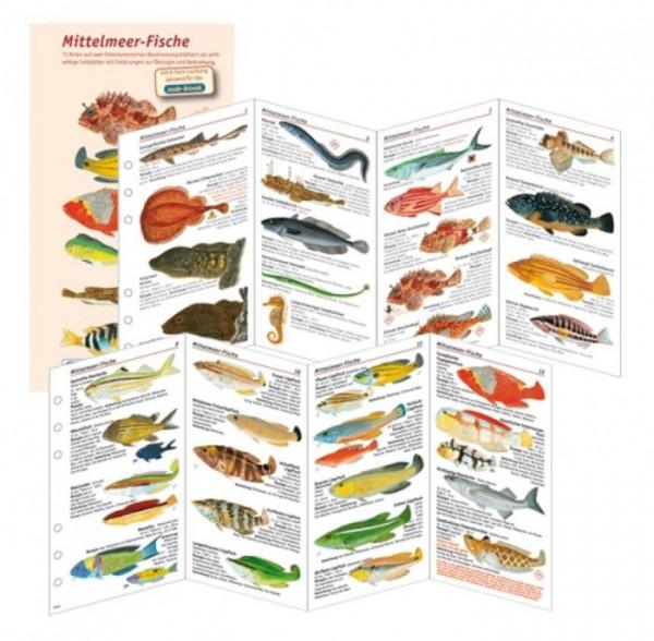 Fischfaltblatt Mittelmeer Fischbestimmungskarte